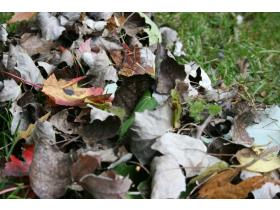 Leaves contained in compost bags or trash cans - 32 gallons or smaller labeled with a yard waste sticker - will be picked up curbside through the week of December 14.